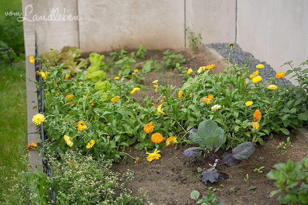 Gartenguckloch im Oktober 2017 – Gemüsebeet