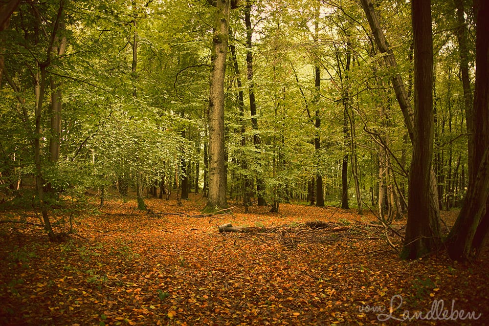 #pmdd24 – Im Wald