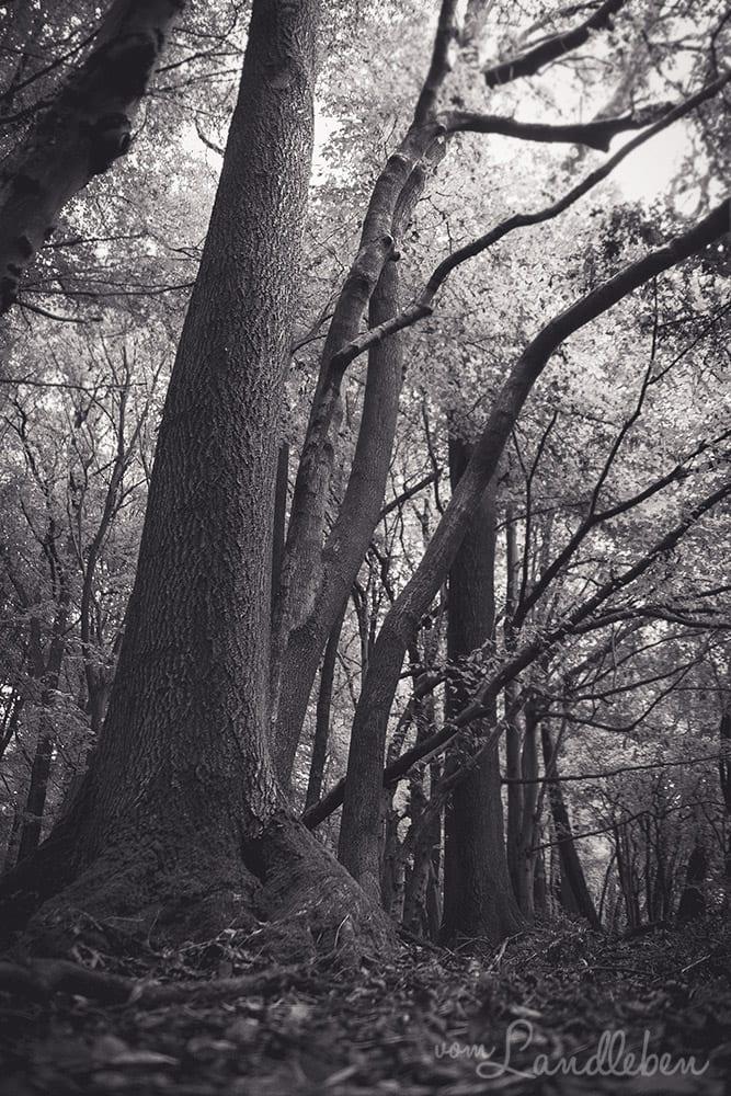 Werifesteria – Im Wald – Herbst 2017