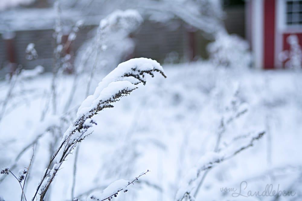 Schnee im Garten – Dezember 2017