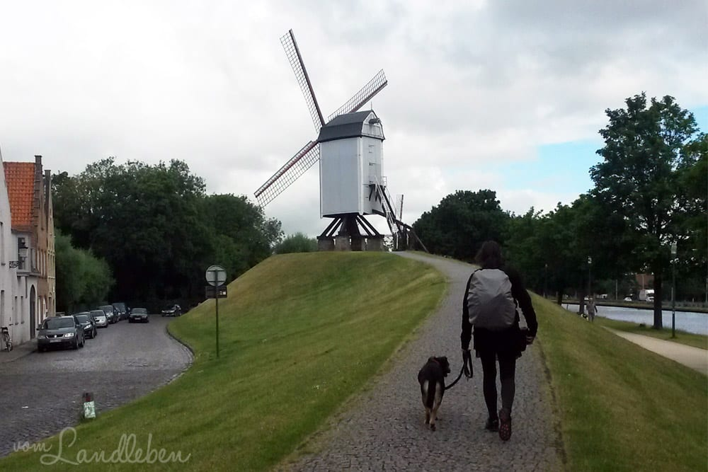 Unsere Hochzeitsreise nach Brügge - mit Hund