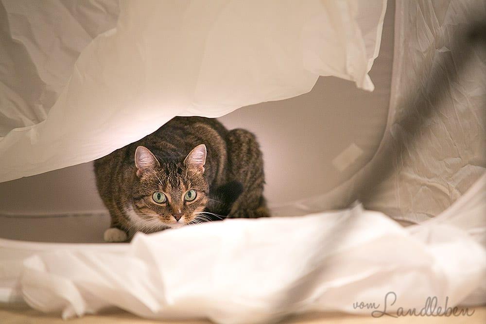 Katze im Fotozelt