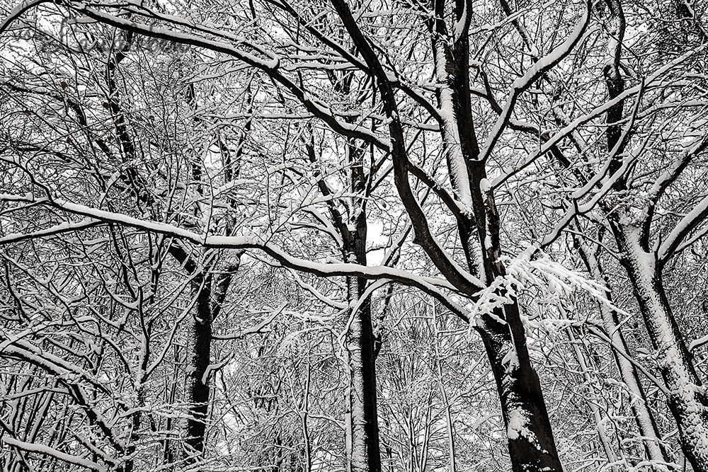 Winter - verschneiter Wald