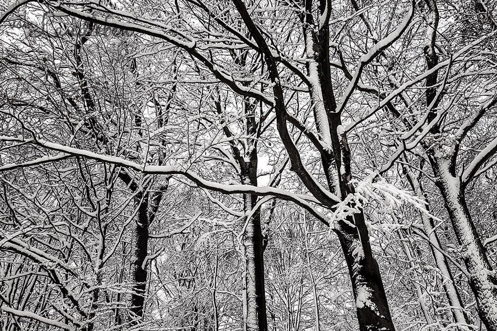 Winter – verschneiter Wald