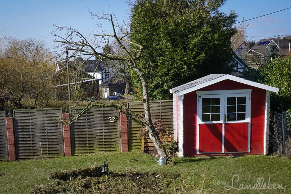 Der alte Apfelbaum im März 2018