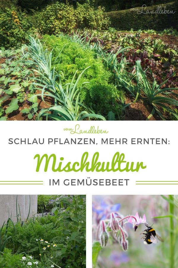 Mischkultur im Gemüsebeet – Tipps