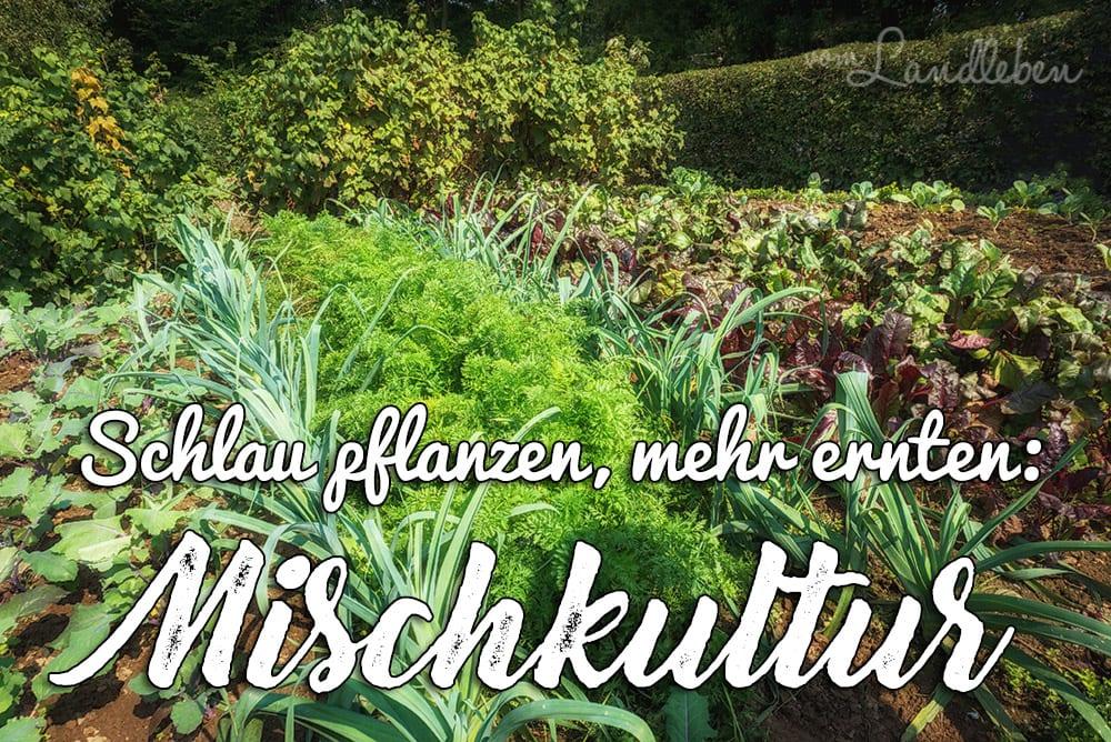 Mischkultur – schlau pflanzen, mehr ernten