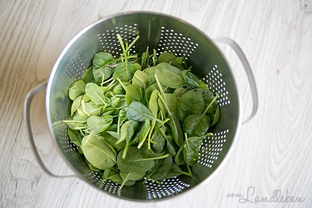 Frischer Spinat aus dem eigenen Garten
