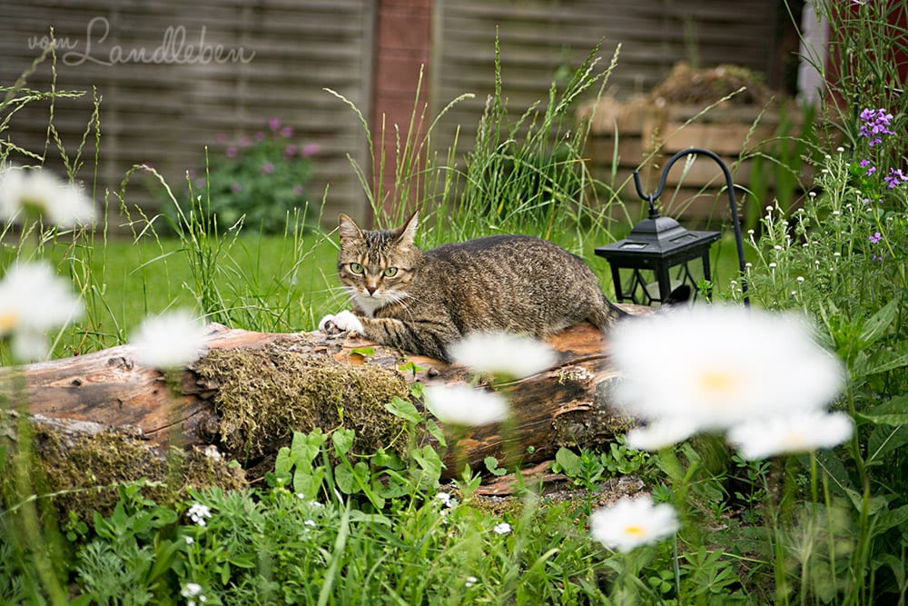 Juli im Garten