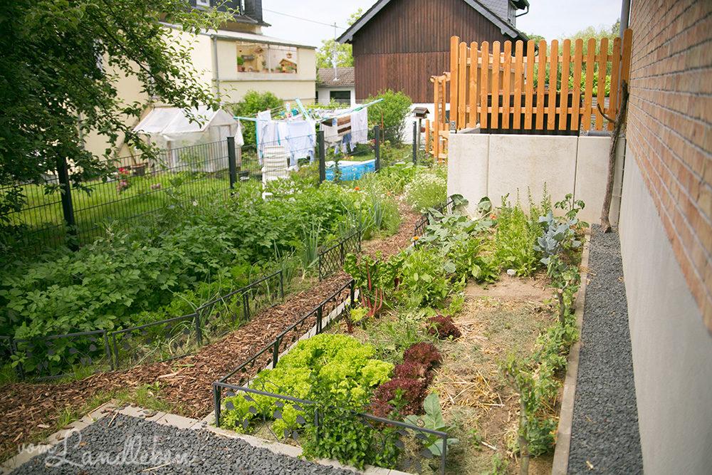 Gemüsegarten im Juni 2018