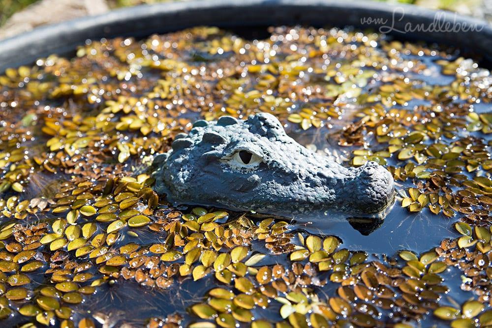 Teich mit Schwummpflanzen und Krokodil