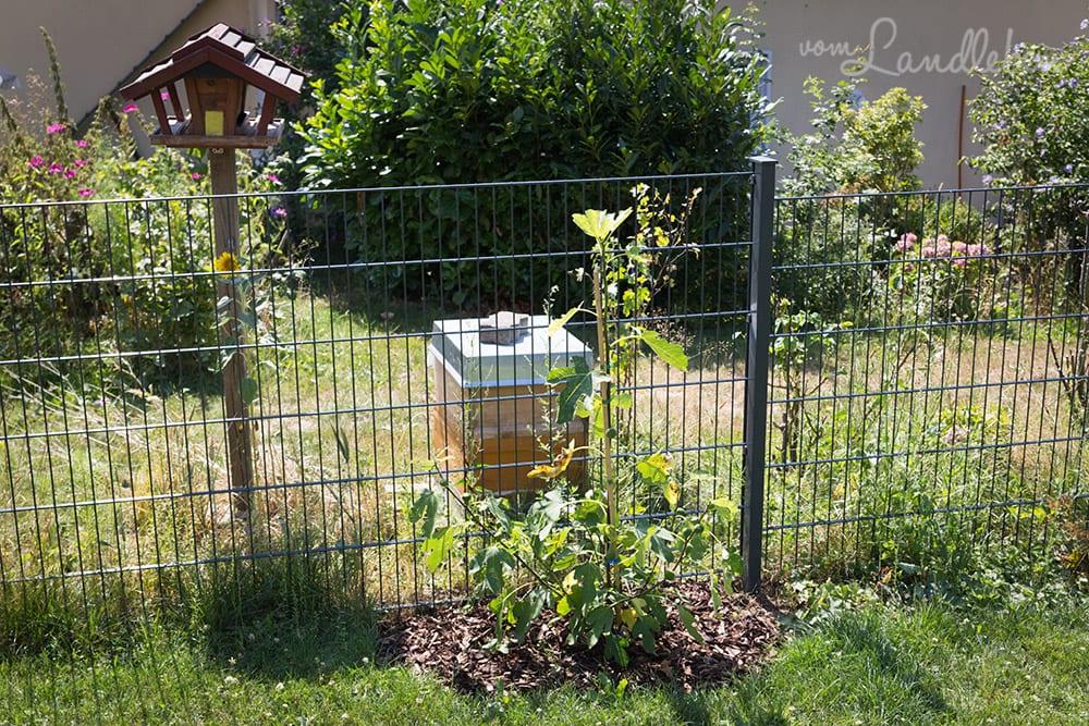 Der Bienenstock unserer Nachbarn steht direkt am Zaun