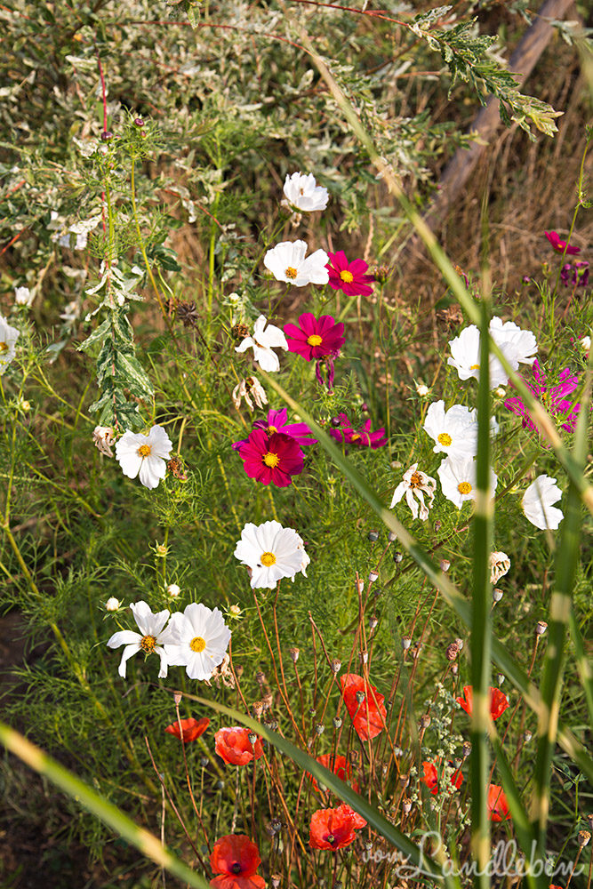 Gartenfehler: alle (Un-)Kräuter herauszupfen