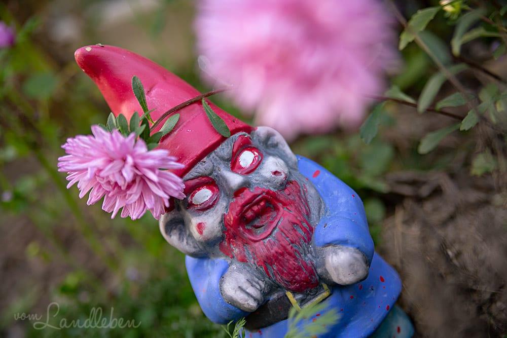 Rosafarbene Astern passen doch perfekt zu dem Kerlchen... :D