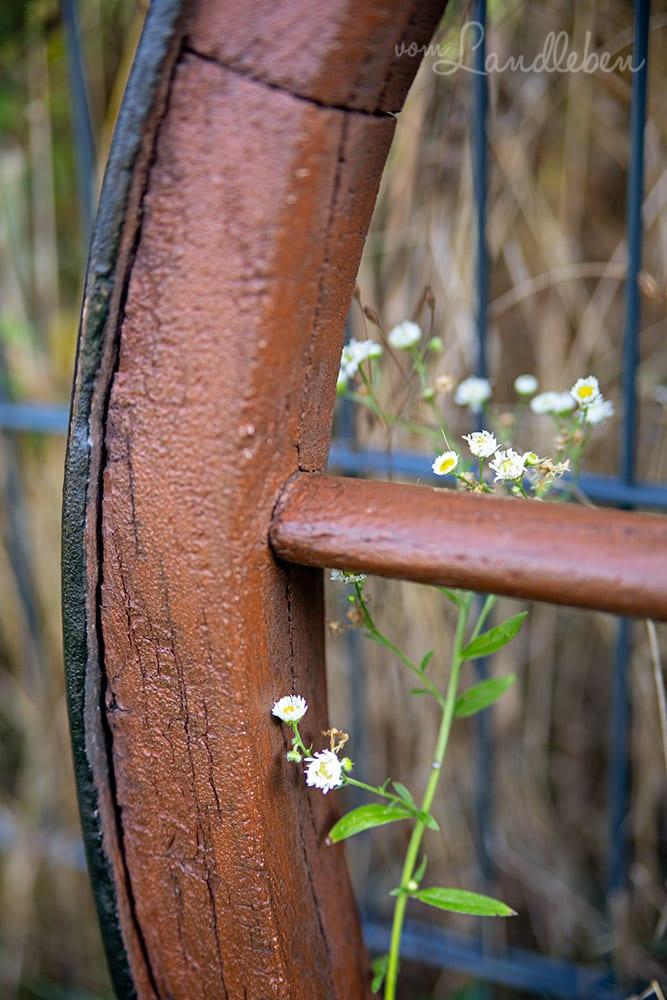 Wildblumen am alten Wagenrad