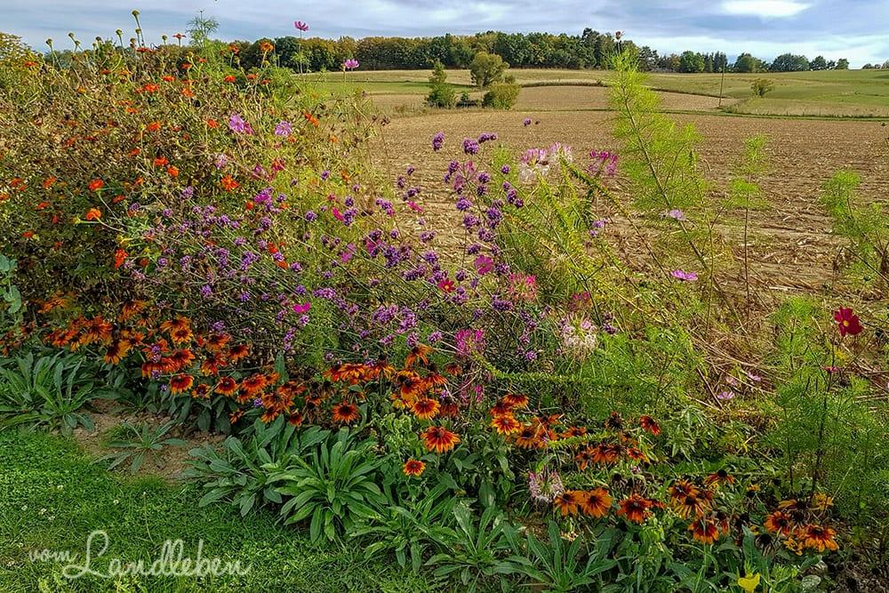 Wildblumen und Stauden in Hennef