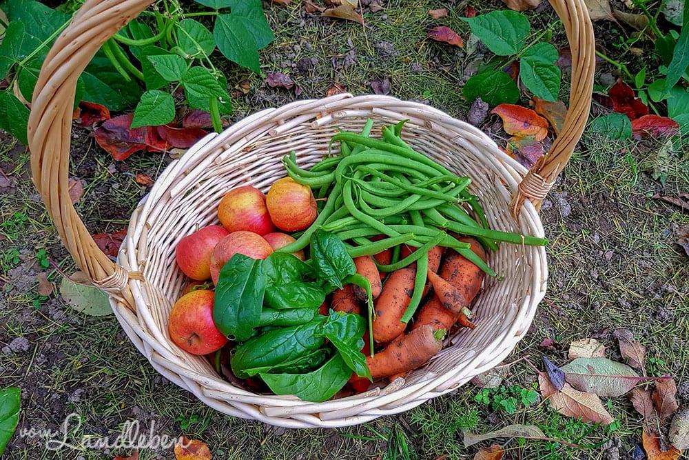 Ernte im Herbst: Buschbohnen, Möhren, Spinat und Äpfel