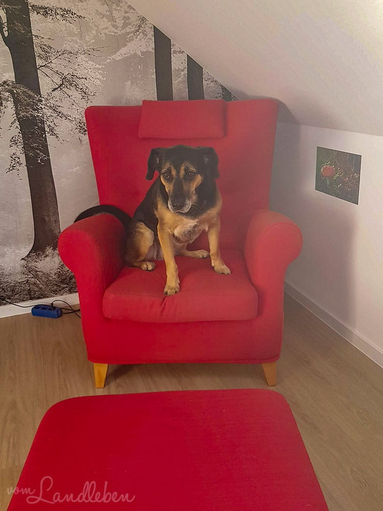Nala im neuen Sessel