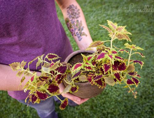 Mein neues Tattoo – mit Wildpflanzen