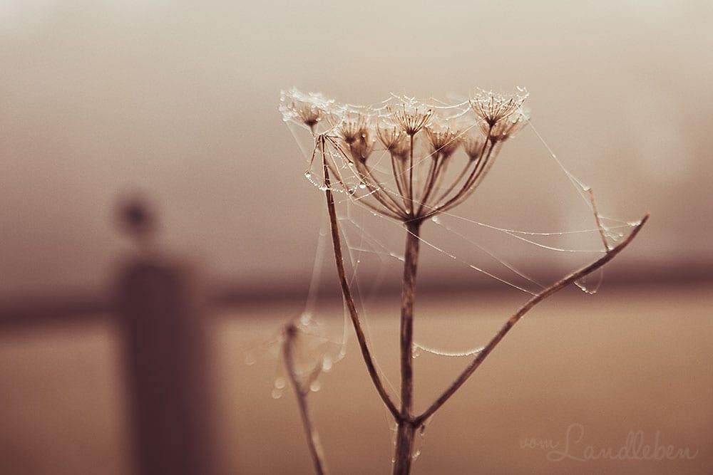 Herbstspaziergang 2018 - Spinnweben