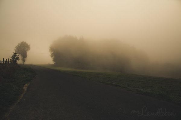 Herbstspaziergang im Nebel - 2018