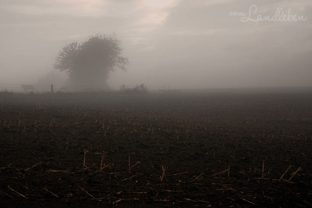 Herbstfotografie 2013