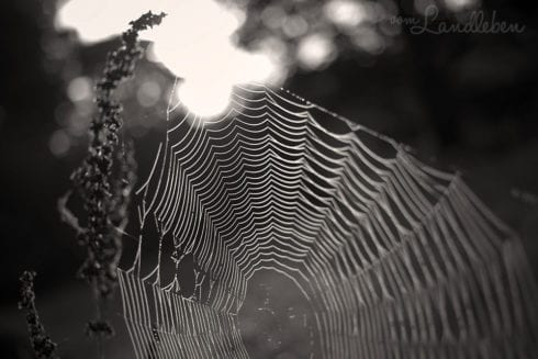 Herbstfotografie 2013 - Spinnennetz