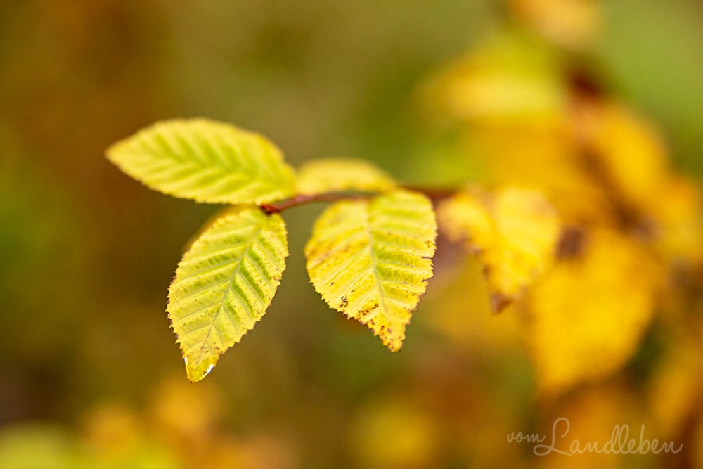 Herbstspaziergang 2018
