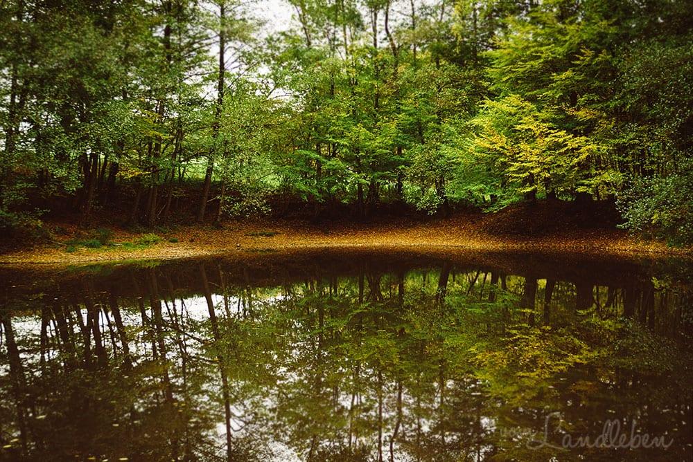 Herbstspaziergang am See im Wald