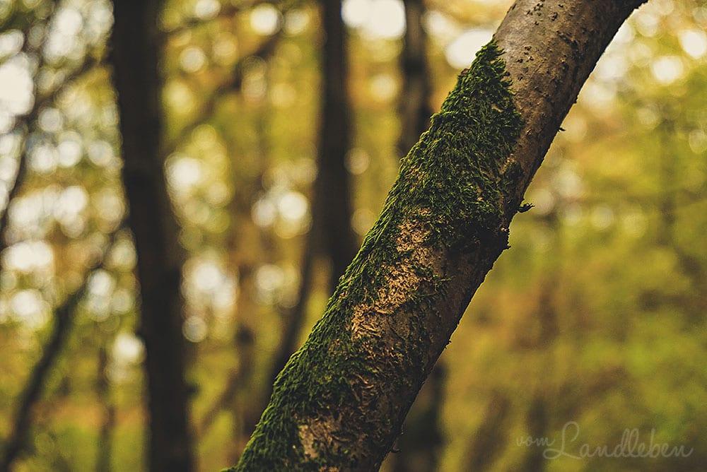 Herbstspaziergang 2018 - Moos