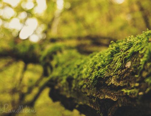 11 Ideen, wie du naturverbundener leben kannst