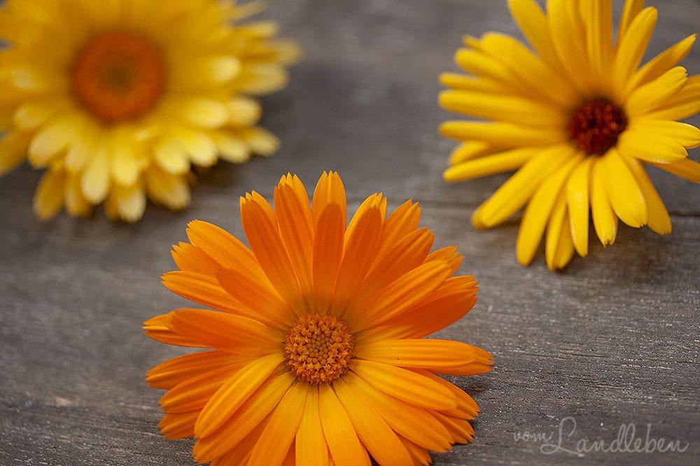 Ringelblumen-Blüten