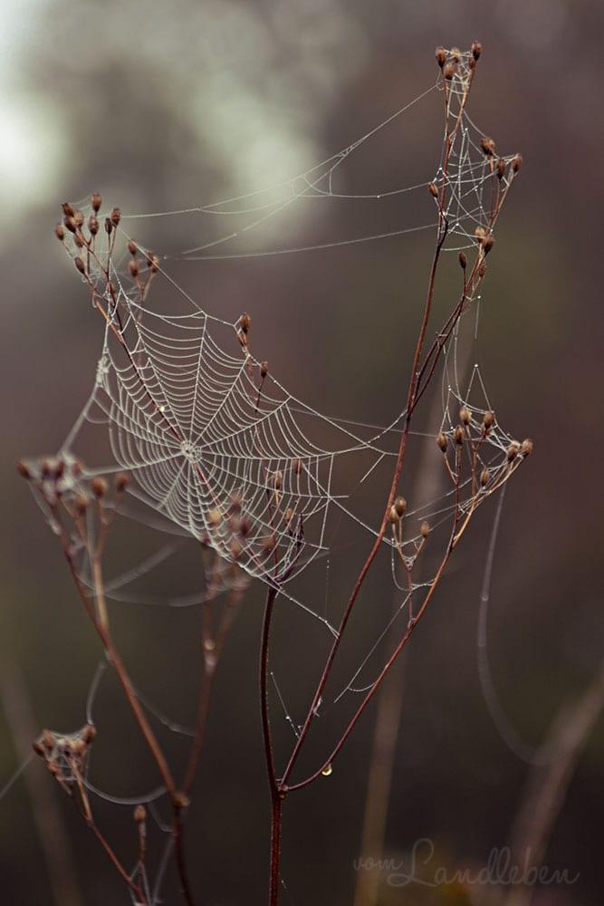Spinnenweben im Herbst