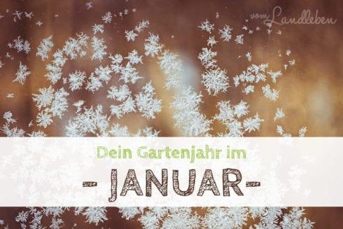 Gartenjahr im Januar
