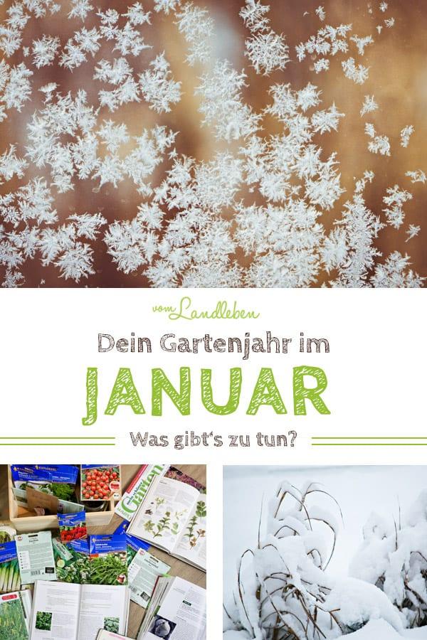 Gartenjahr im Januar: welche Gartenarbeit steht an?