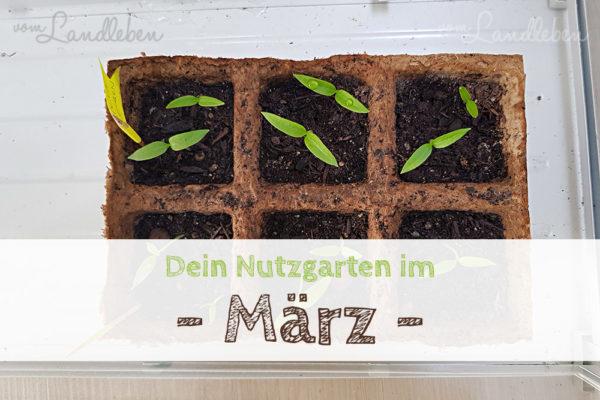 Nutzgarten-Tipps im März