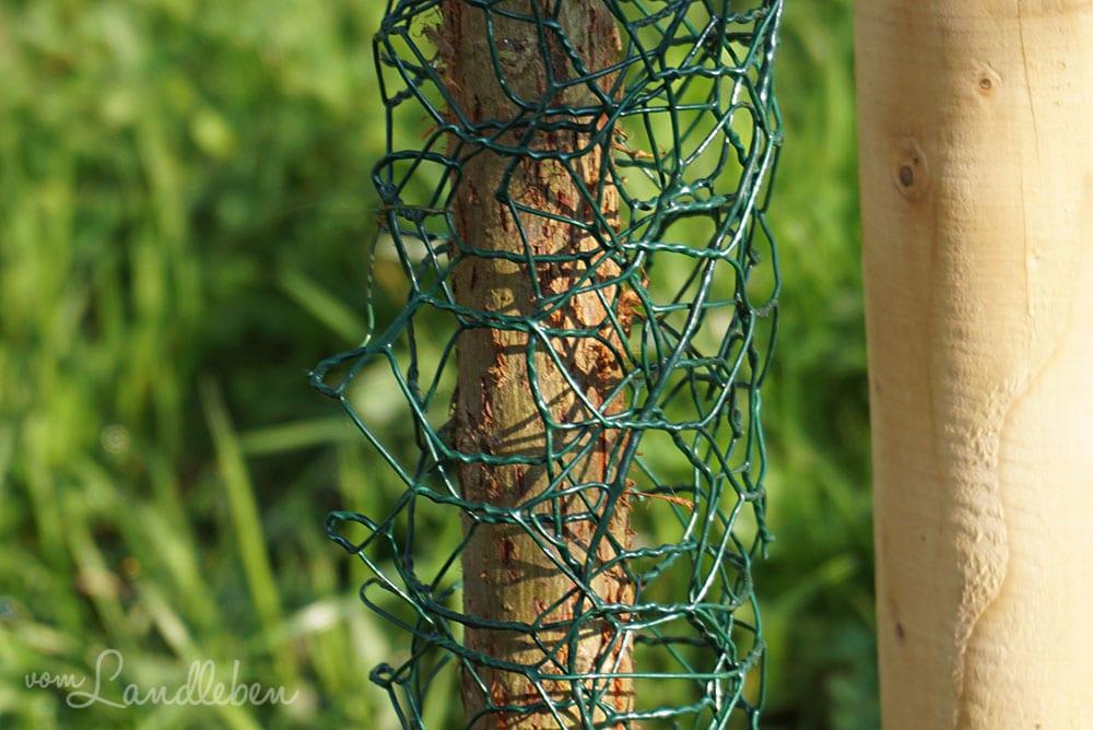Draht schützt den Baum vor Katzen