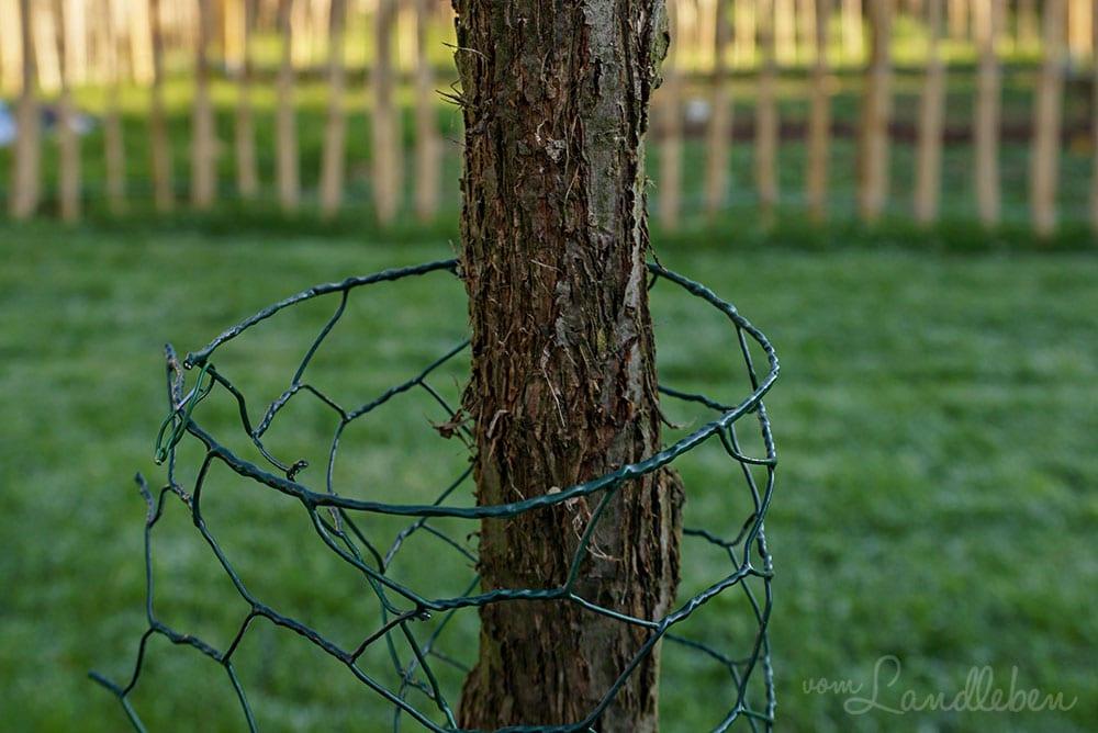 Baumstamm mit Hasendraht vor Katzen schützen