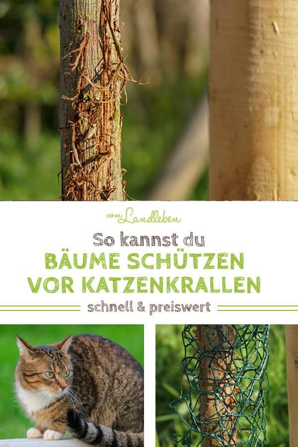 So kannst du deinen Baum vor Katzenkrallen schützen: