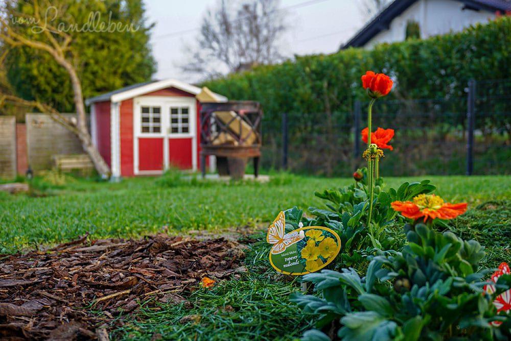 Unser Gartenguckloch im März 2019