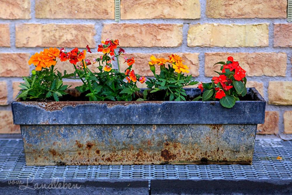 Blumenkasten im Hof - Mai 2019