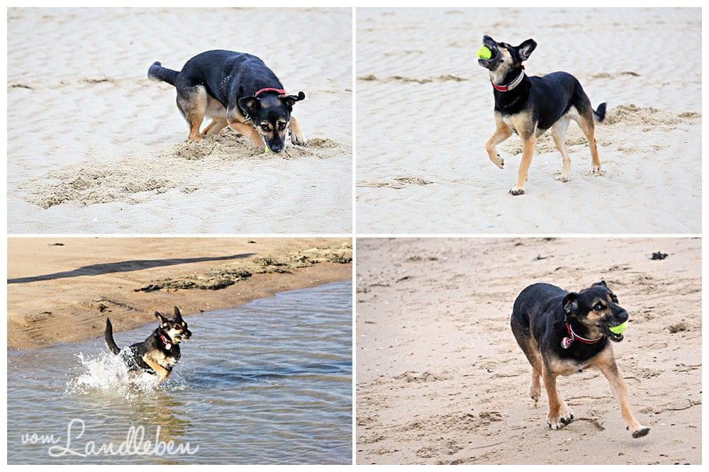 Nala - Hund am Strand - Oktober 2015