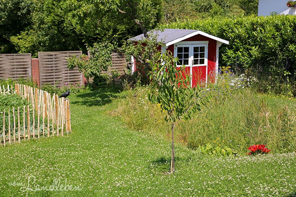Garten im Juni 2019