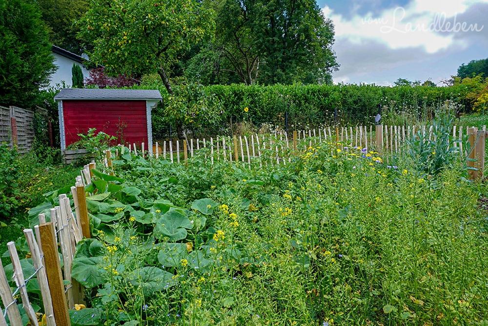 Bauerngarten im Juli 2019