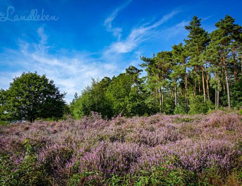 Wandern in der Wahner Heide auf der Fliegenberg-Tour
