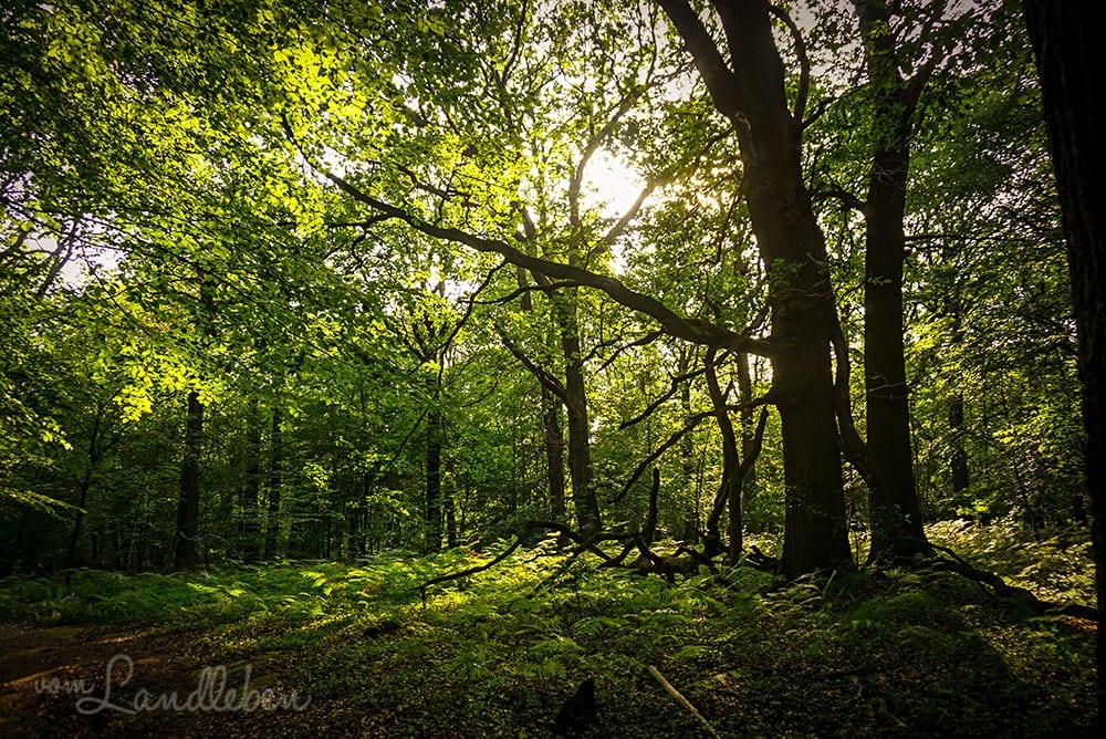 Wandern in der Wahner Heide - Eichenwald