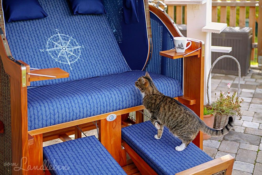 Katze am Strandkorb