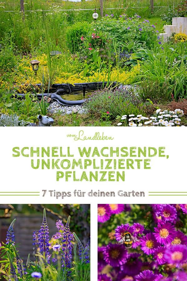 7 schnell wachsende, unkomplizierte Pflanzen für deinen Garten