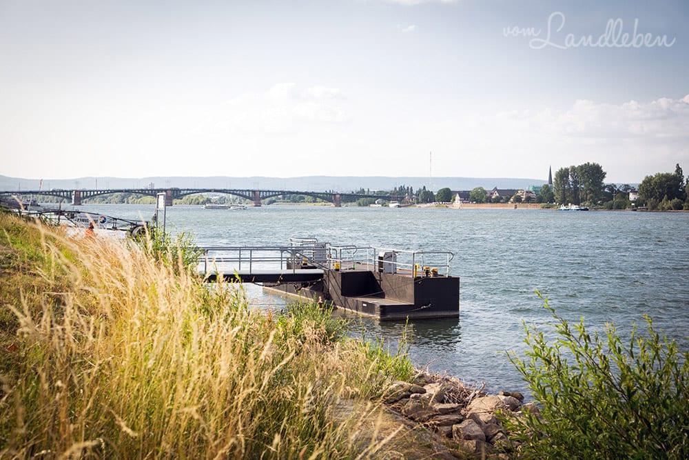 Der Rhein in Mainz