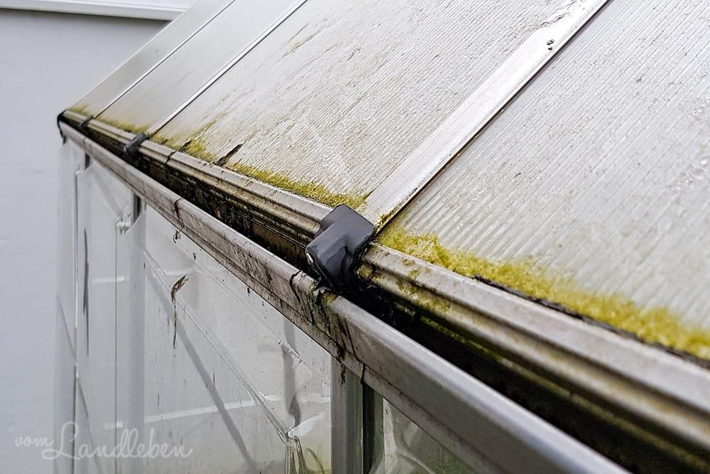 Regenrinne vom Gewächshaus putzen